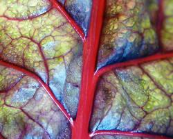 Les plantes qui soulagent les veines