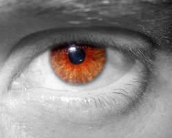 maladies-de-l-oeil
